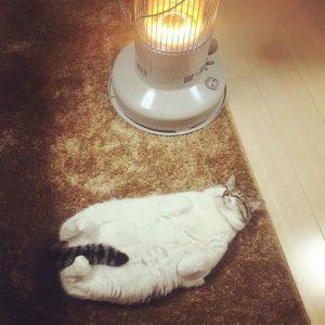 Nên chọn đèn sưởi hay máy sưởi